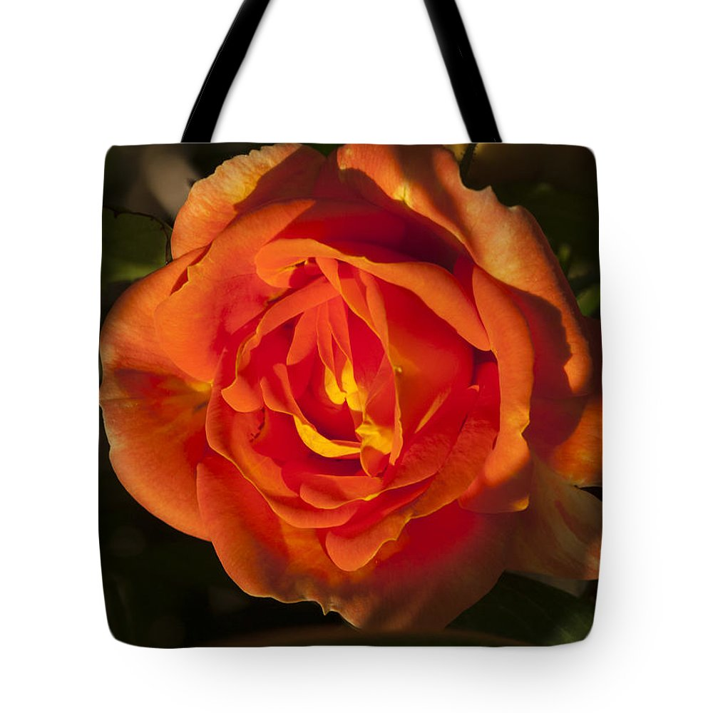 Rose Tote Bag featuring the photograph Rose Orange by Richard Thomas
