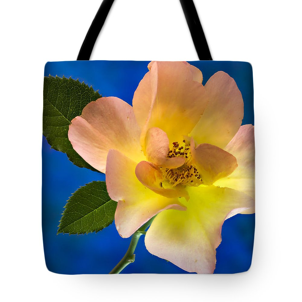 Rose Tote Bag featuring the photograph Rose Portrait by Jean Noren
