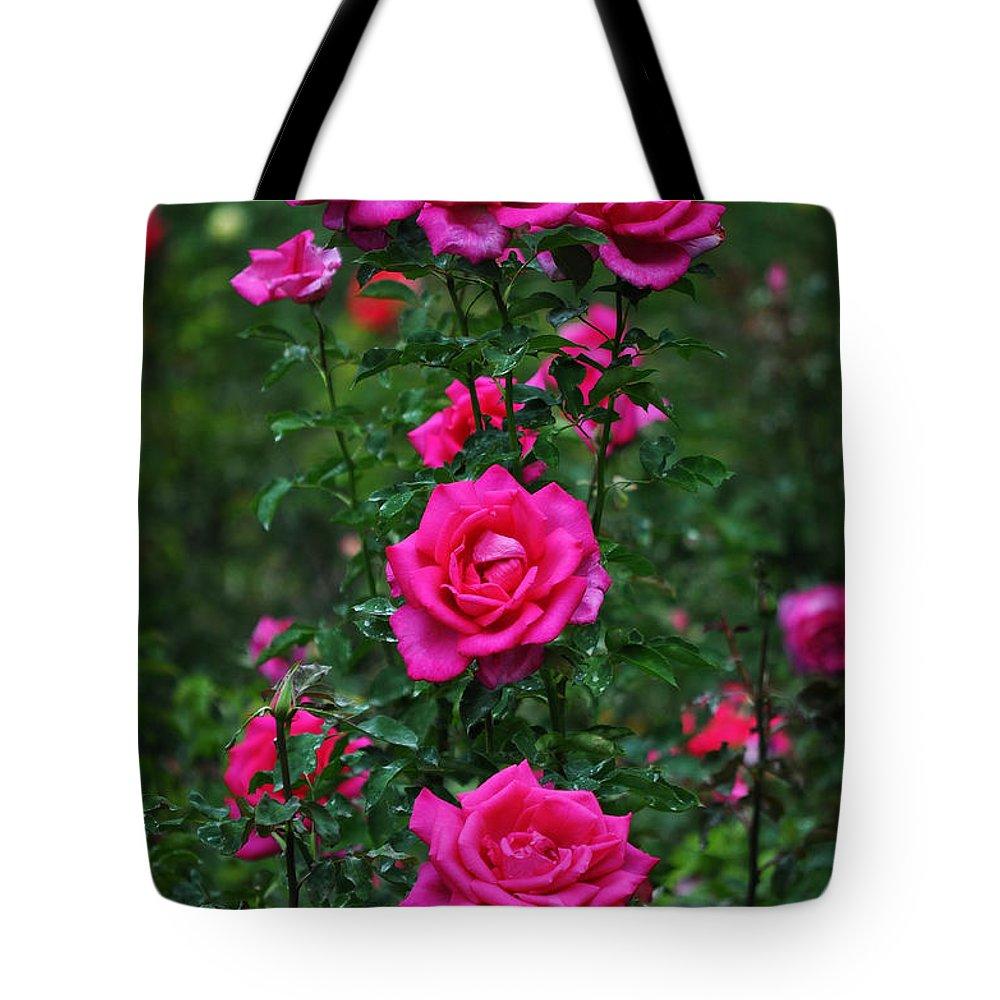 Rosebush Lifestyle Products