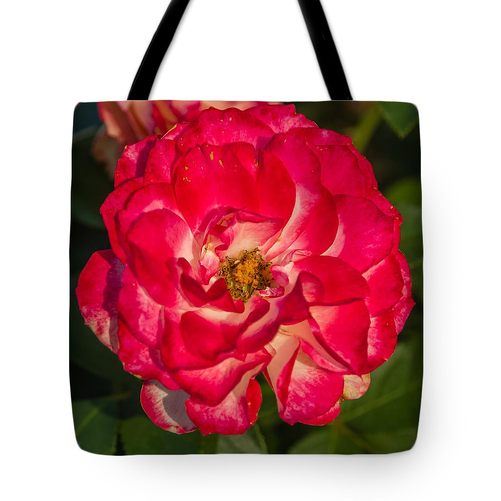 Flower Tote Bag featuring the photograph Rosey Rose by Jane Luxton