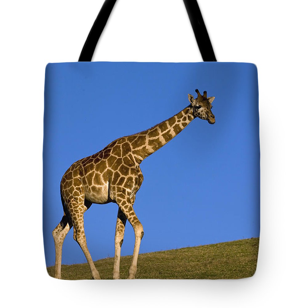 Mp Tote Bag featuring the photograph Rothschild Giraffe by Zssd