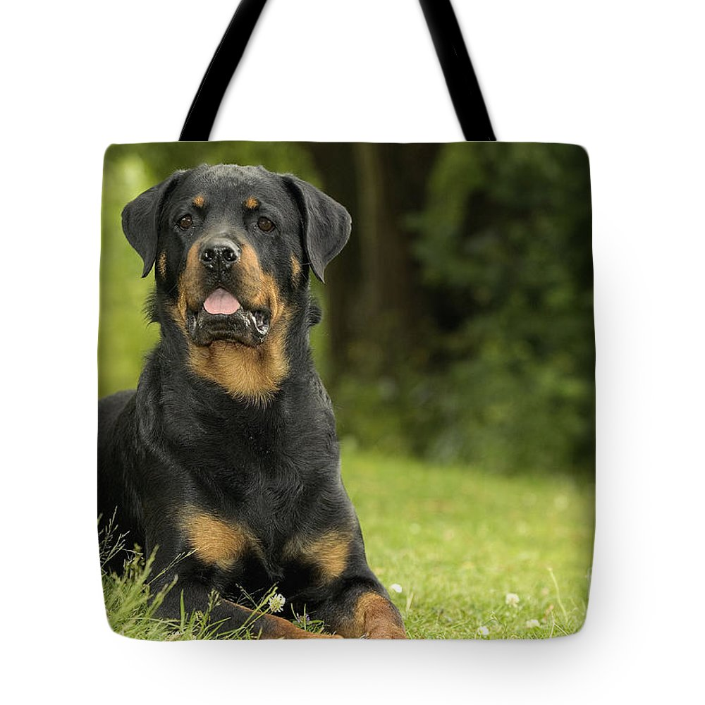 Rottweiler Tote Bag featuring the photograph Rottweiler Dog by Jean-Michel Labat