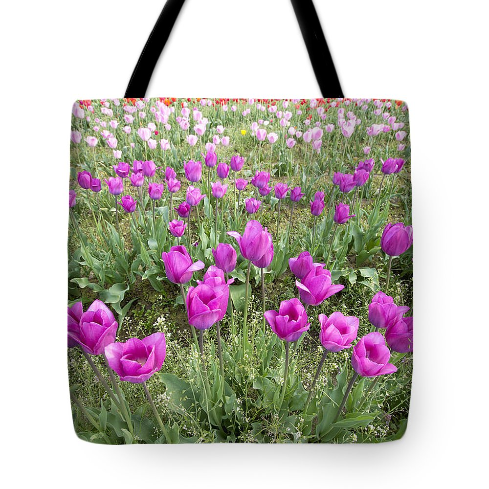 Tulips Tote Bag featuring the photograph Rows Of Pink And Purple Tulip Flowers by Jit Lim