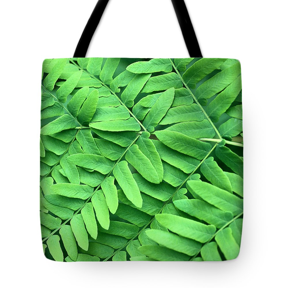 Fn Tote Bag featuring the photograph Royal Fern Frond Detail by Niels Kooyman