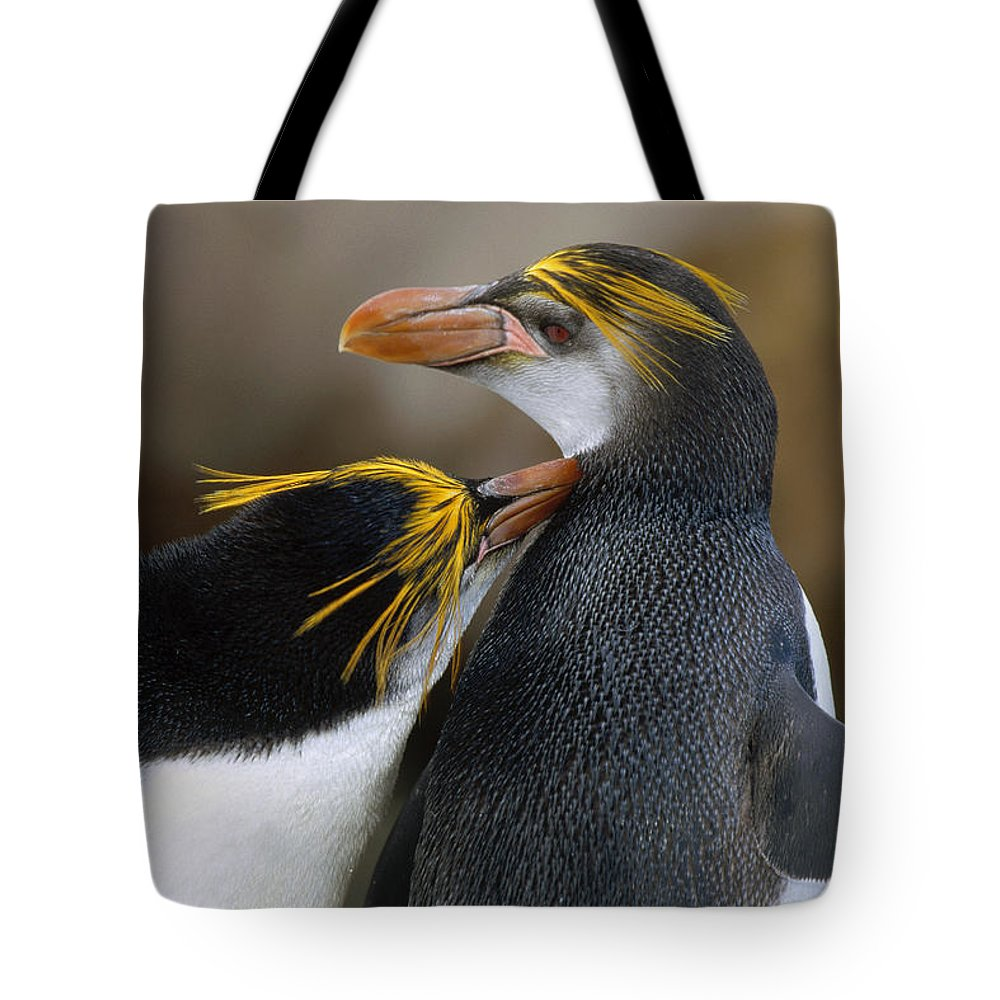Affection Tote Bag featuring the photograph Royal Penguin Couple Courting by Konrad Wothe