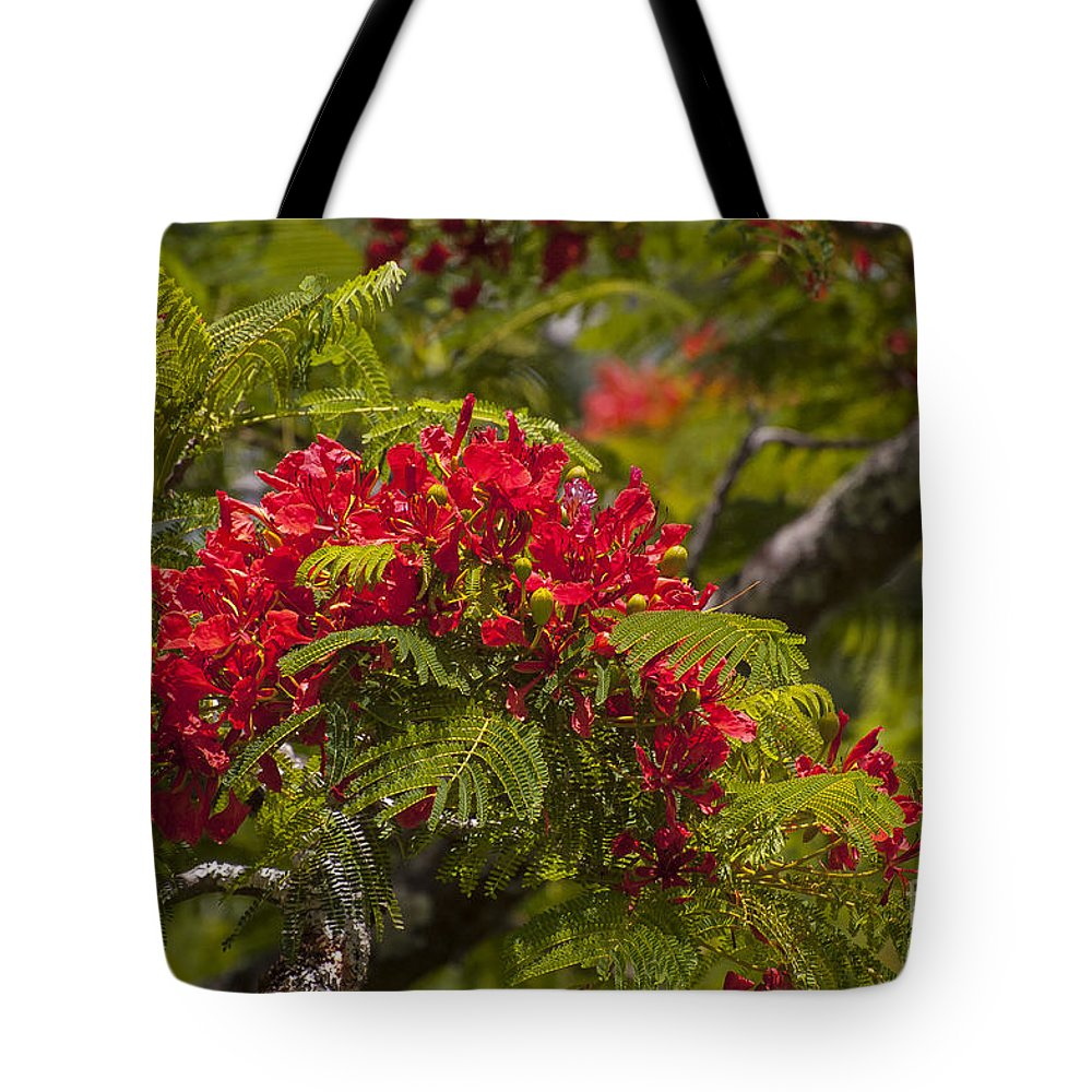 Flamboyant Flame Tree Royal Poinciana Trees Flower Flowers Bloom Blooms Blossom Blossoms Nature East Maui Hawaii Tote Bag featuring the photograph Royal Poinciana by Bob Phillips