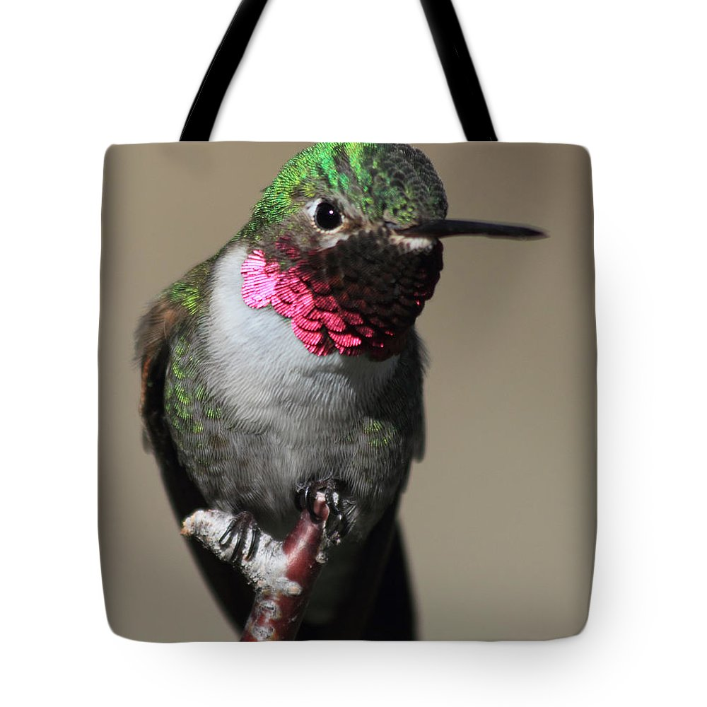 Ruby-throated Hummingbird Tote Bag featuring the photograph Ruby-throated Hummer by Shane Bechler