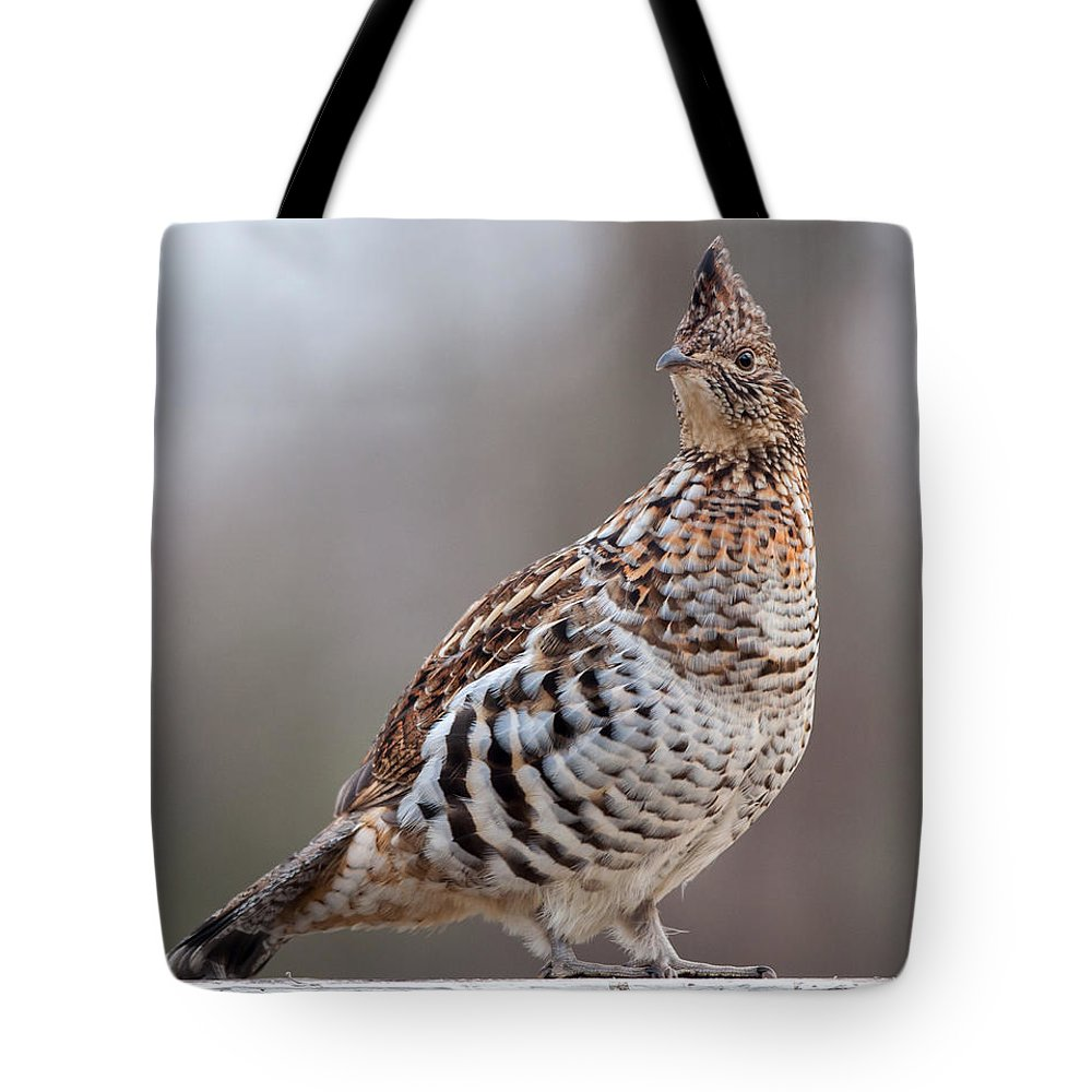 Female Tote Bag featuring the photograph Ruffed Grouse by Richard Kitchen