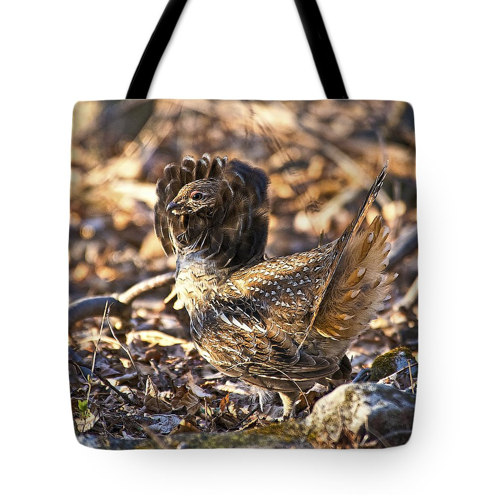 Ruffed Grouse Tote Bag featuring the photograph Ruffed Grouse Ruff by Timothy Flanigan