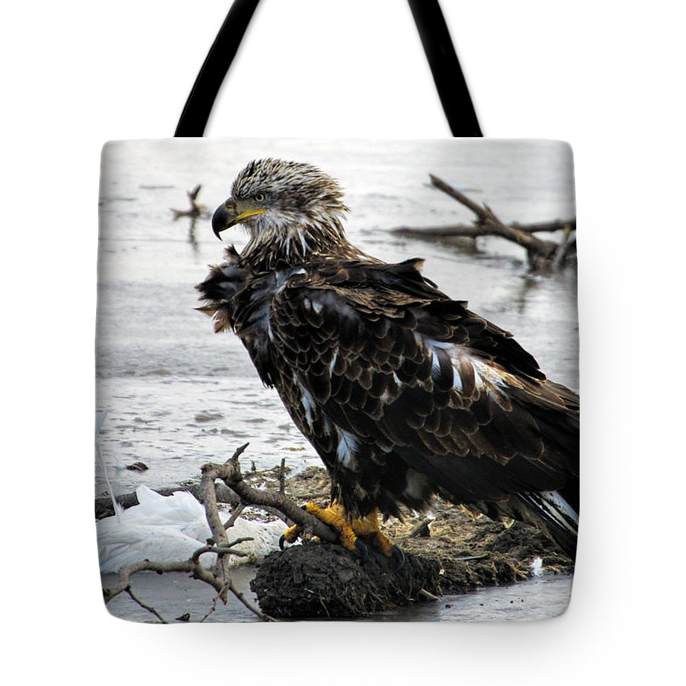 Bald Eagle Tote Bag featuring the photograph Ruffled Feathers by Alan Hutchins