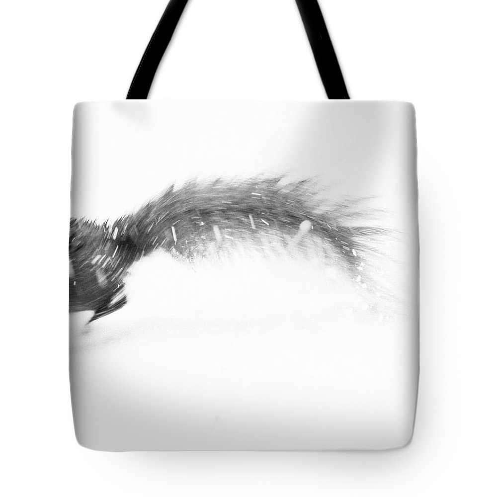 Squirrel Tote Bag featuring the photograph Run Away by Pati Photography