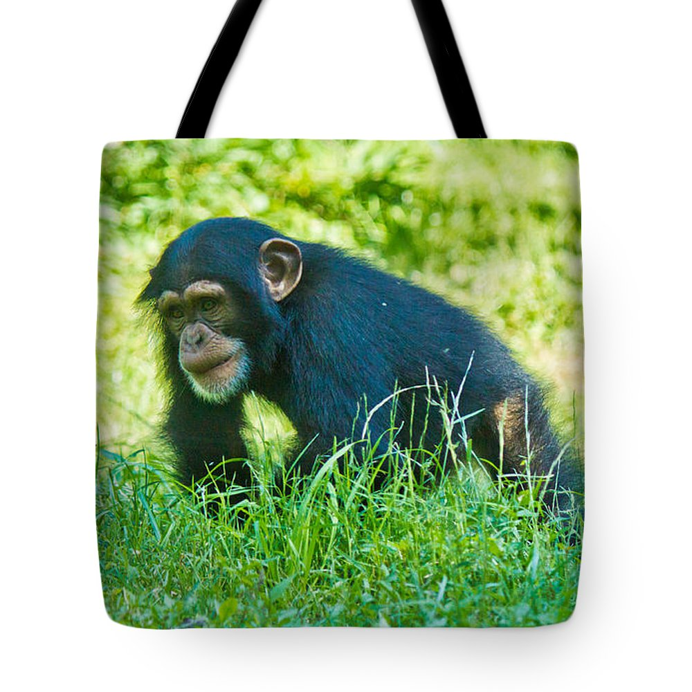 Animals Andearth Tote Bag featuring the photograph Running Chimp by Jonny D