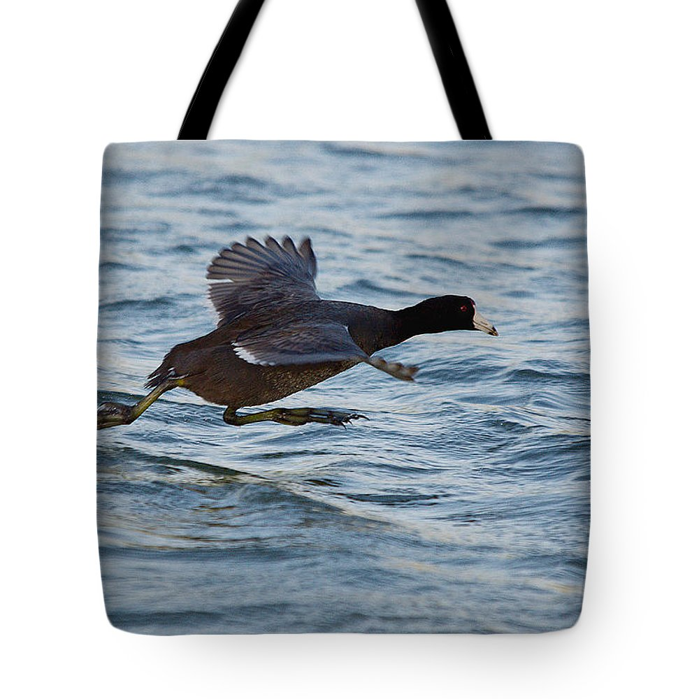 Bird Tote Bag featuring the photograph Running On Water Series 5 by Roy Williams