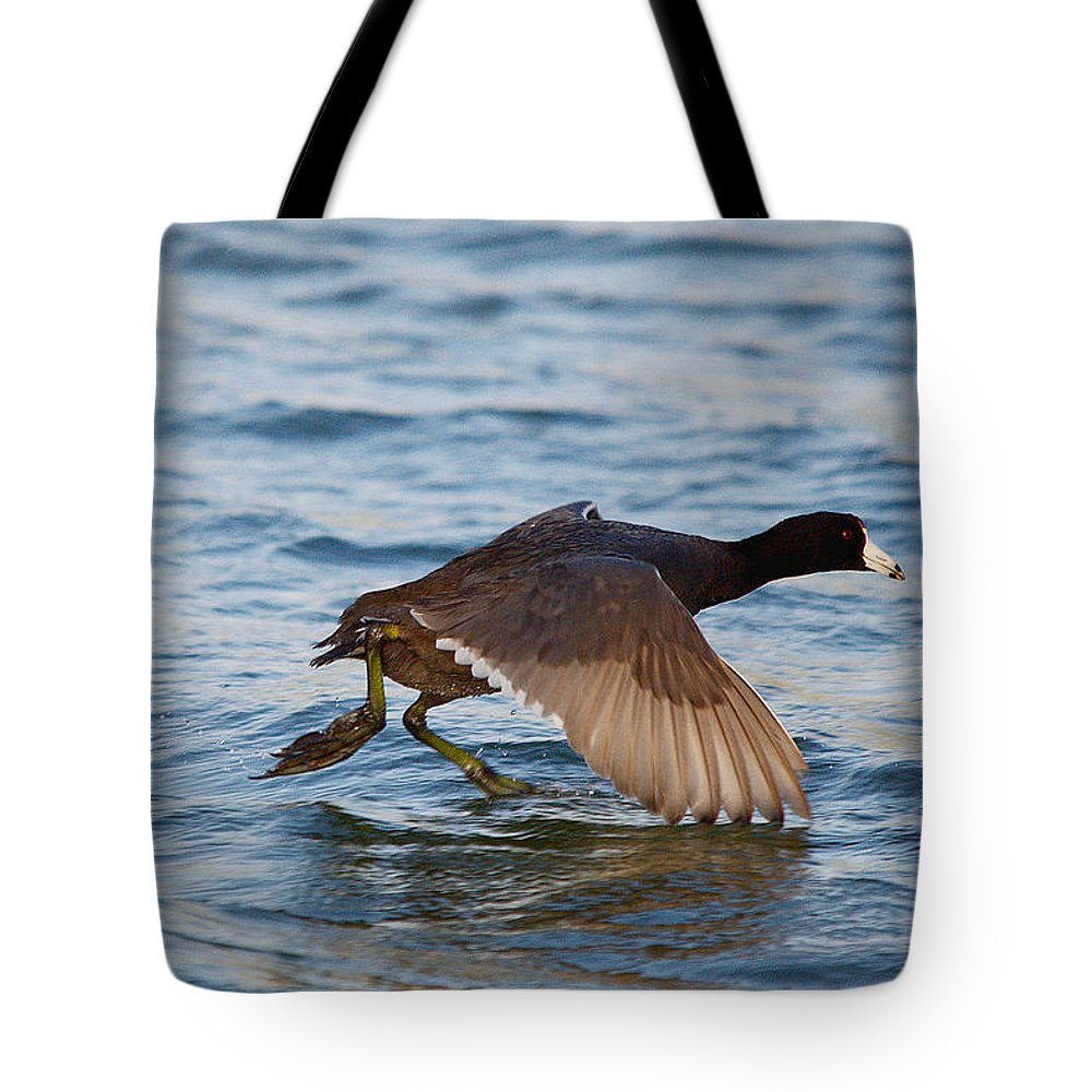 Bird Tote Bag featuring the photograph Running On Water Series 6 by Roy Williams