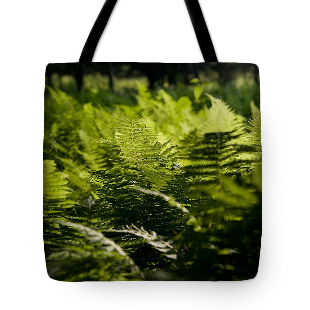 Fern Tote Bag featuring the photograph Sailing The Fern Sea by Shane Holsclaw