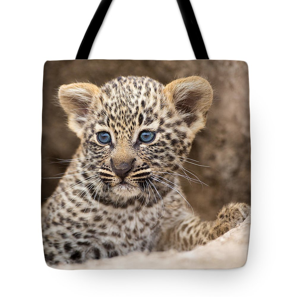 Africa Tote Bag featuring the photograph Salayexe's Cub by Max Waugh