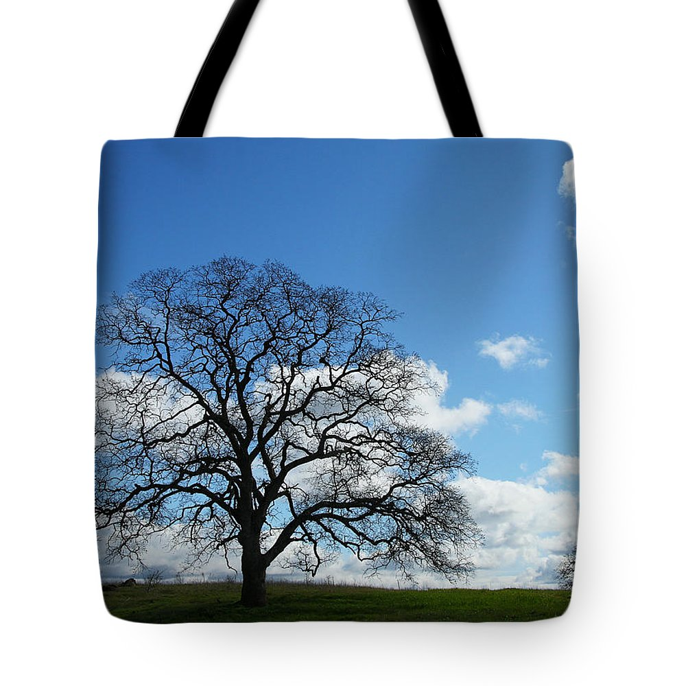 Tree Tote Bag featuring the photograph Same Tree Many Skies 11 by Robert Woodward