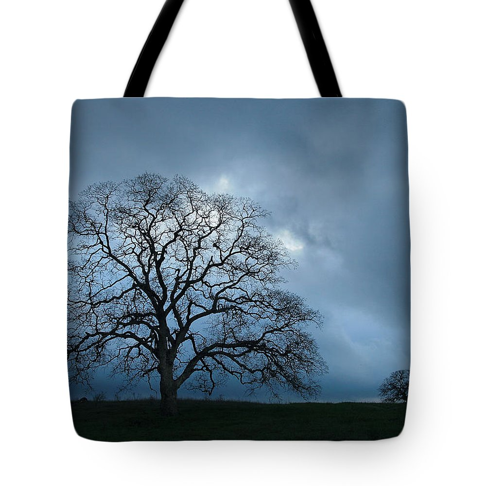 Tree Tote Bag featuring the photograph Same Tree Many Skies 14 by Robert Woodward