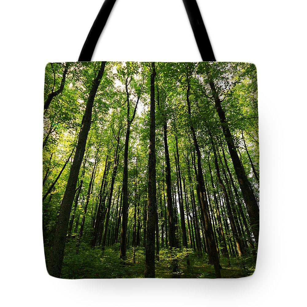 Trees Tote Bag featuring the photograph Sanctuary by Gaurav Singh