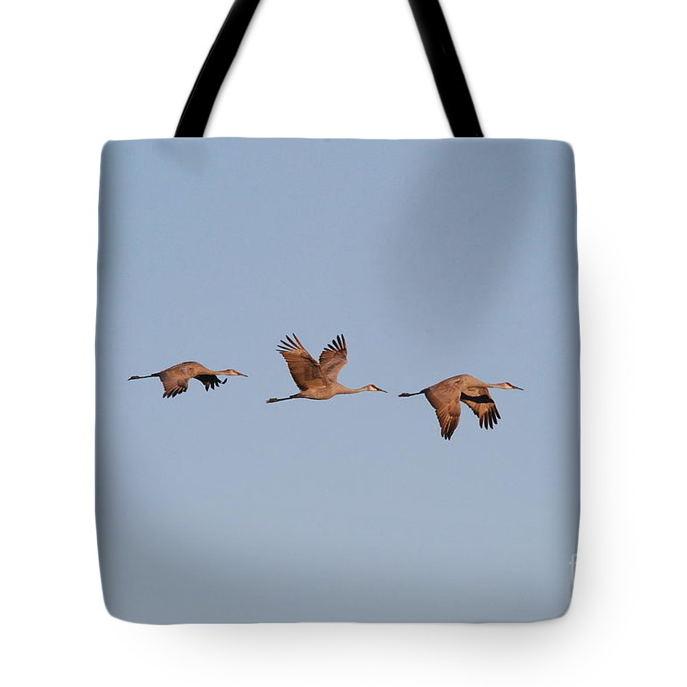 Cranes Tote Bag featuring the photograph Sand Hill Cranes by David Murray