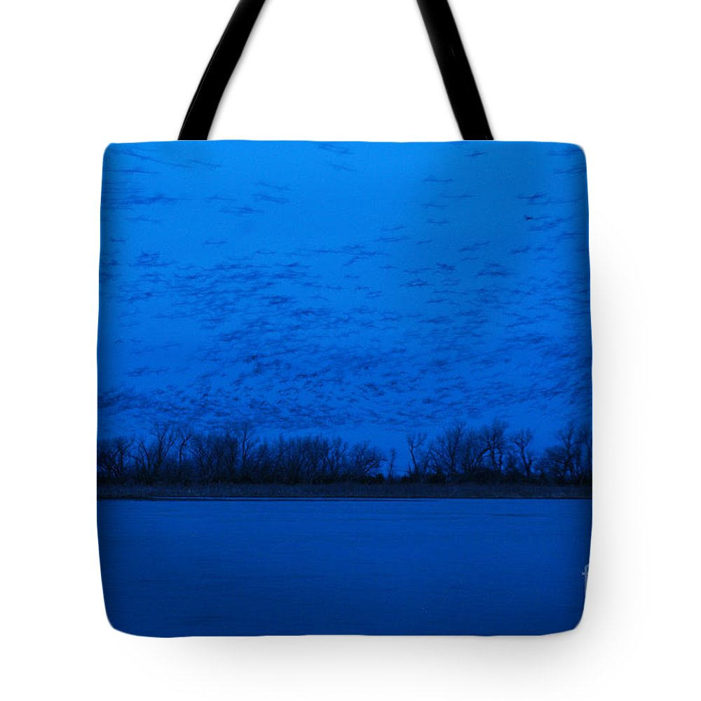 Sandhill Cranes Tote Bag featuring the photograph Sandhill Crane Blue Hour by Joan Wallner
