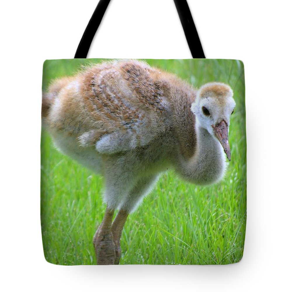 Cranes Chick Tote Bag featuring the photograph Sandhill Crane Chick I by Zina Stromberg