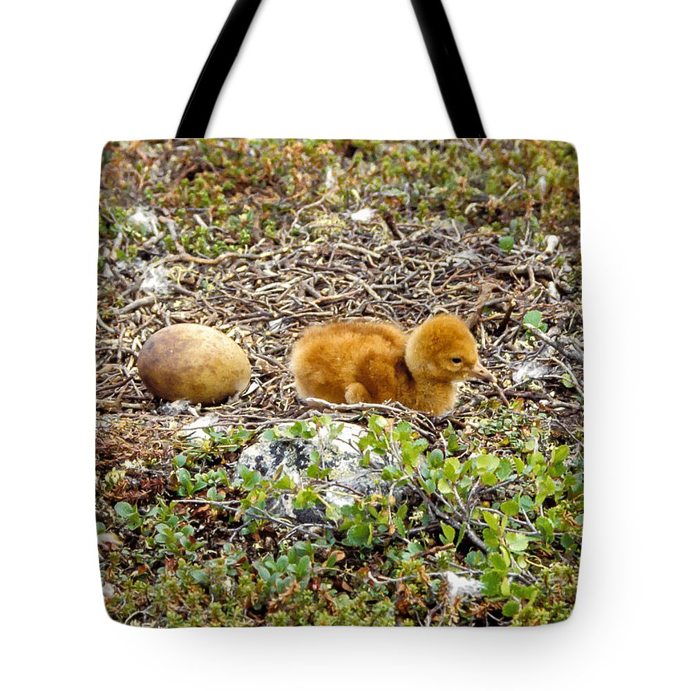 Birds Tote Bag featuring the photograph Sandhill Crane Chick by Steven Ralser