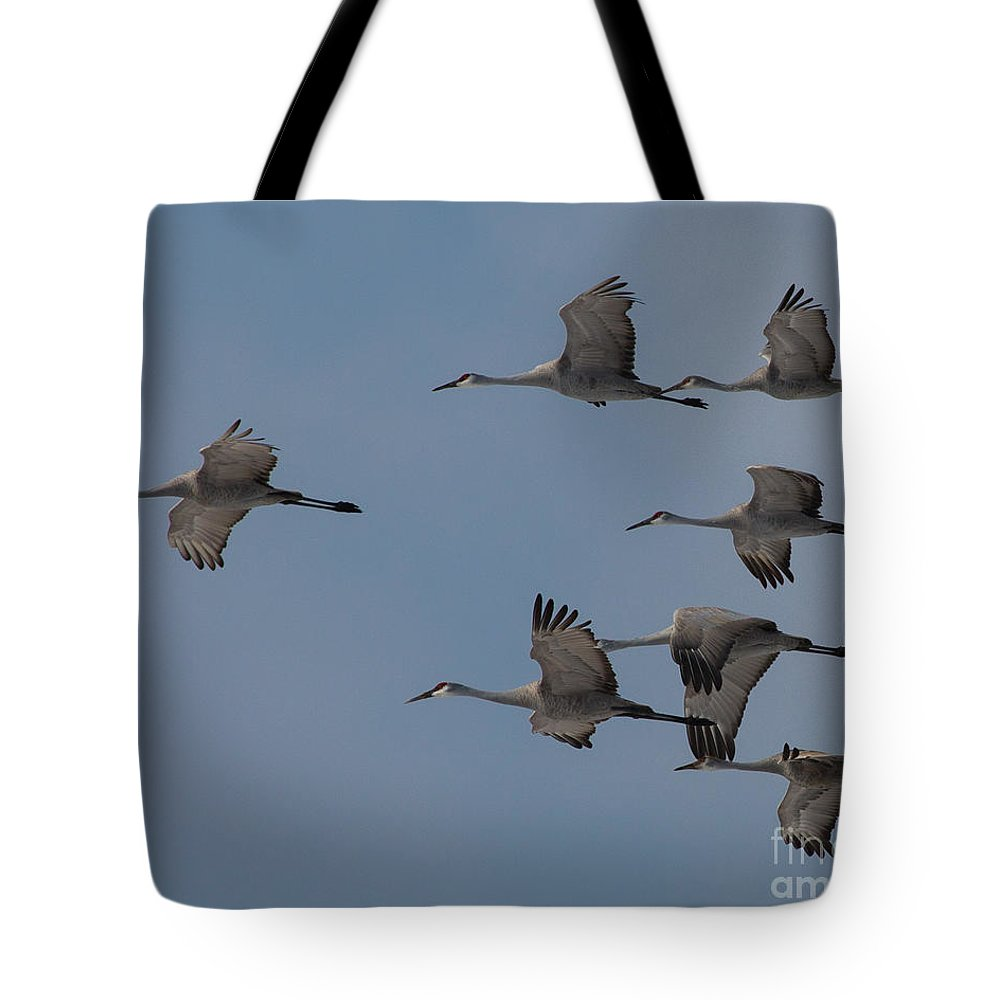 Sandhill Tote Bag featuring the photograph Sandhill Crane Group by Flying Turkey