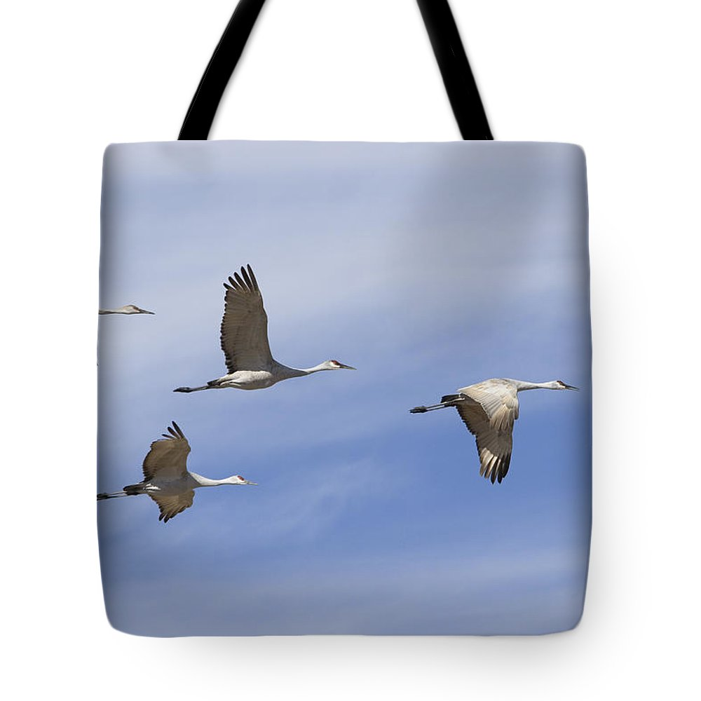 Bosque Del Apache Tote Bag featuring the photograph Sandhill Cranes Grus Canadensis Flying by Konrad Wothe