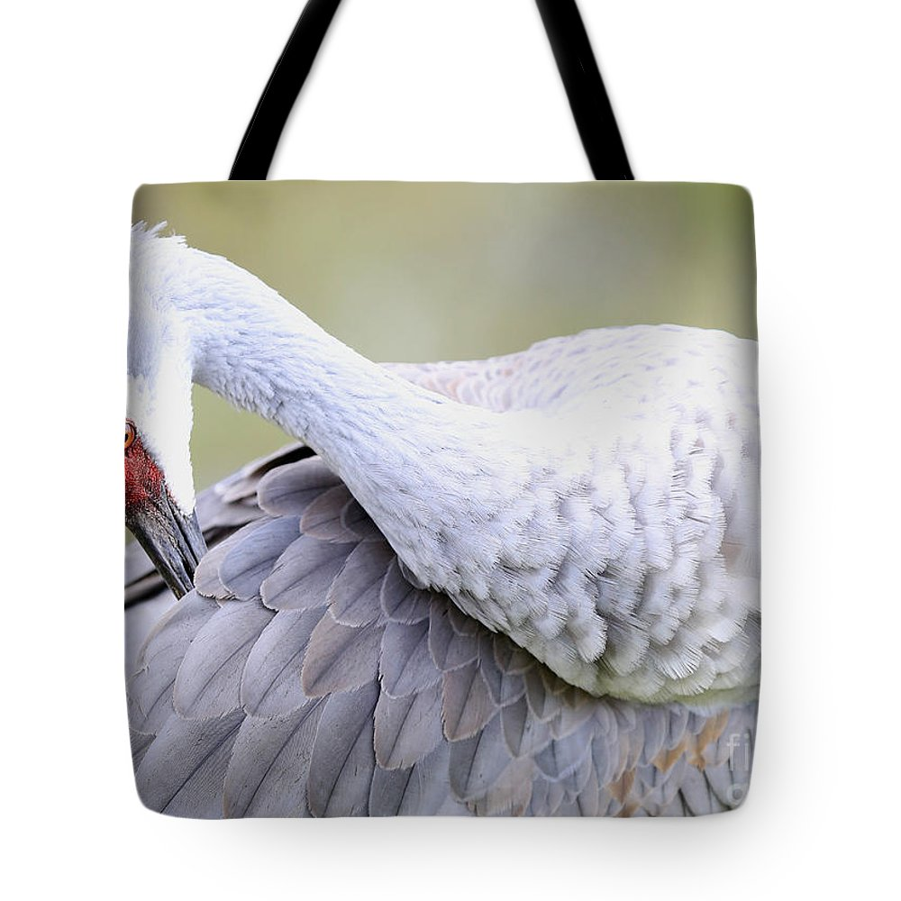 Sandhill Tote Bag featuring the photograph Sandhill Preening In Green by Carol Groenen