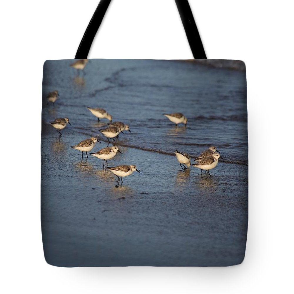 Sandpipers Tote Bag featuring the photograph Sandpipers 5 by Allan Morrison