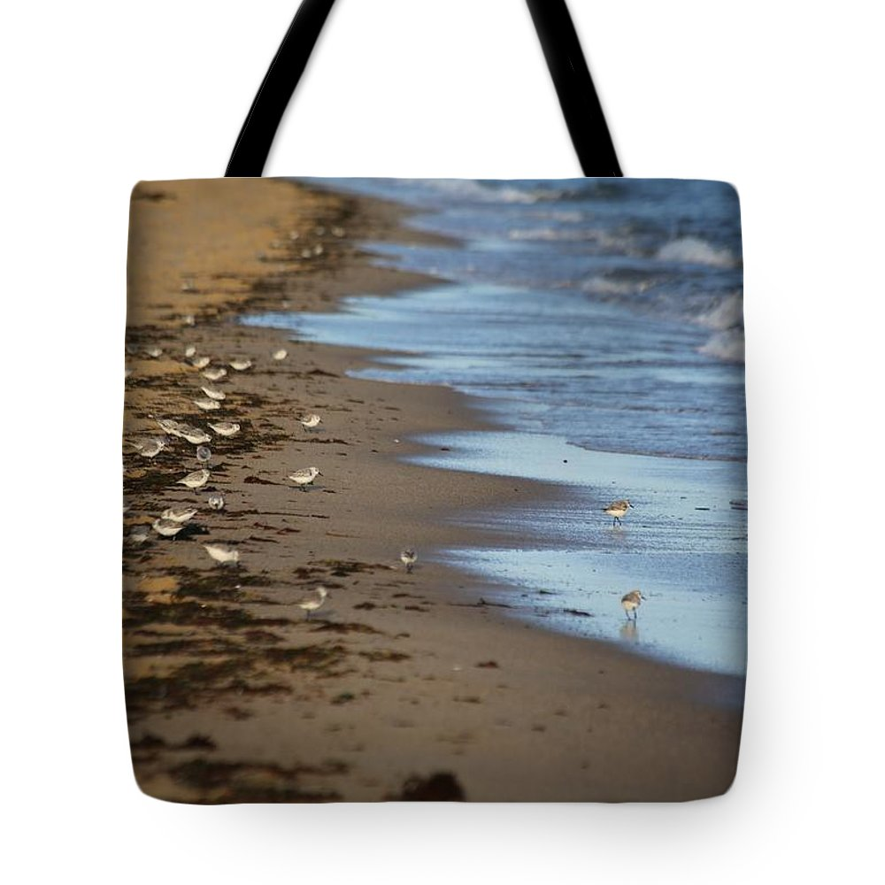 Sandpipers Tote Bag featuring the photograph Sandpipers by Allan Morrison