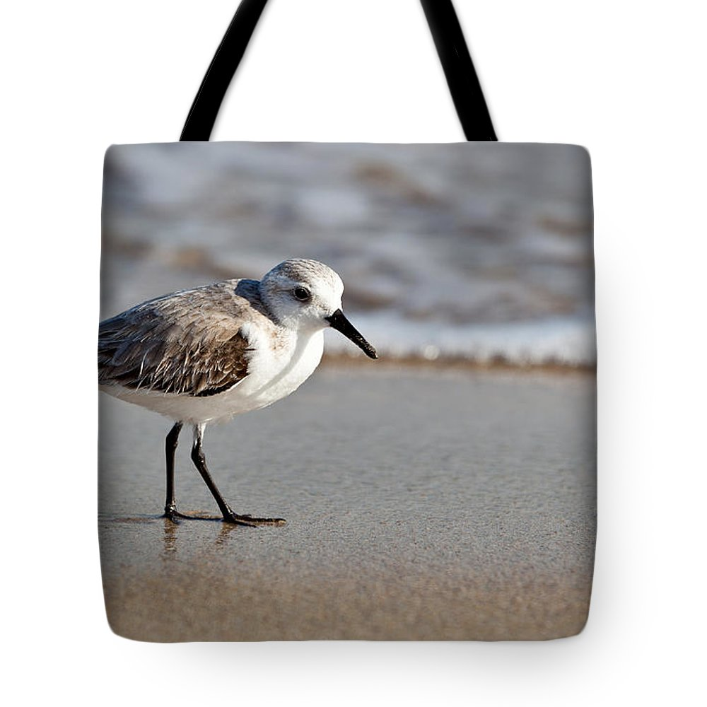 Sandpipers Secrets Tote Bag featuring the photograph Sandpipers Secrets by Michelle Constantine
