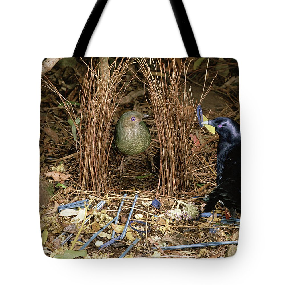 Australia Tote Bag featuring the photograph Satin Bowerbird Pair At Bower by Michael and Patricia Fogden