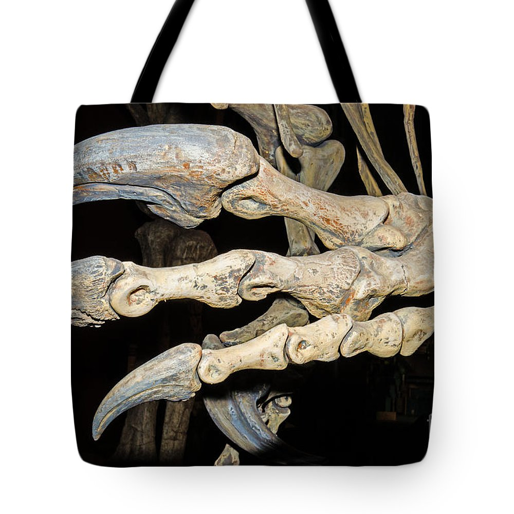 Nature Tote Bag featuring the photograph Saurophaganax Dinosaur Claw Fossil by Millard H Sharp