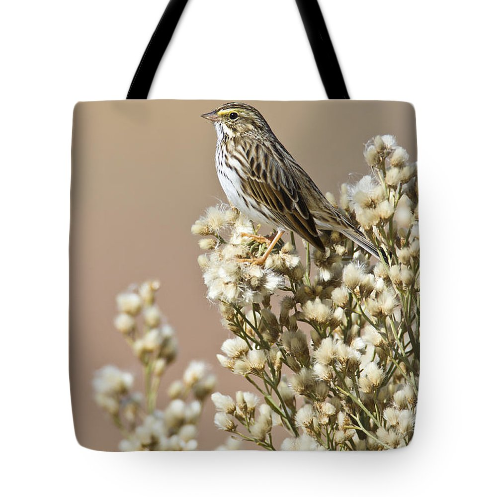 Sparrow Tote Bag featuring the photograph Savannah Sparrow by Bryan Keil