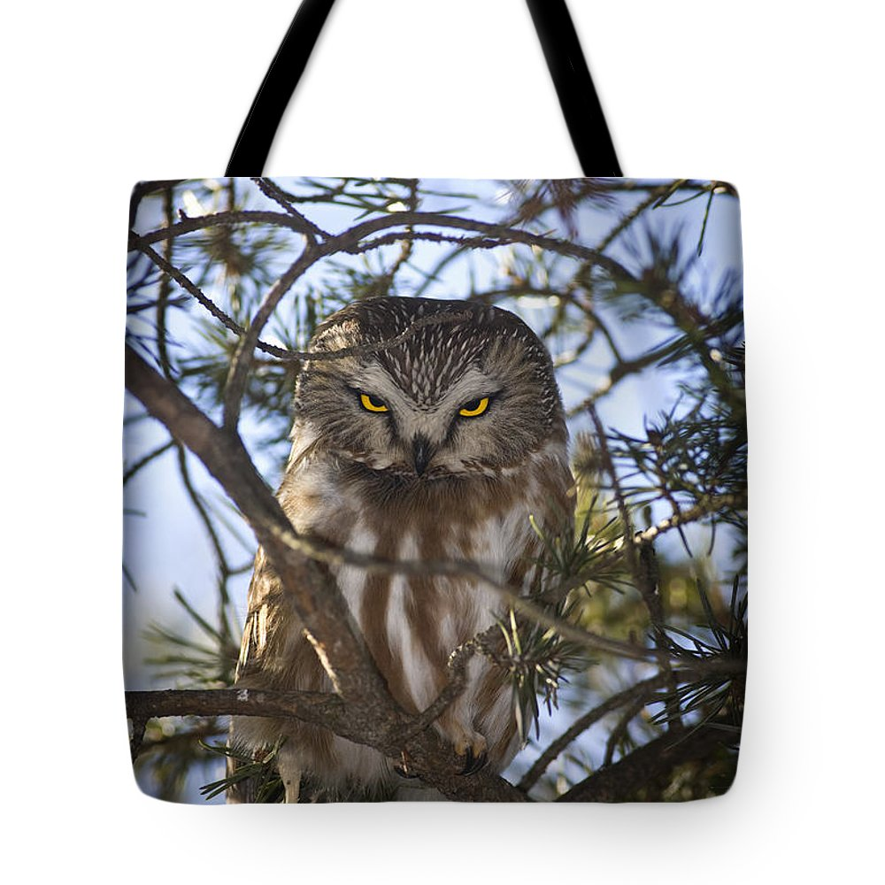 Light Tote Bag featuring the photograph Saw Whet Owl by John Bennett