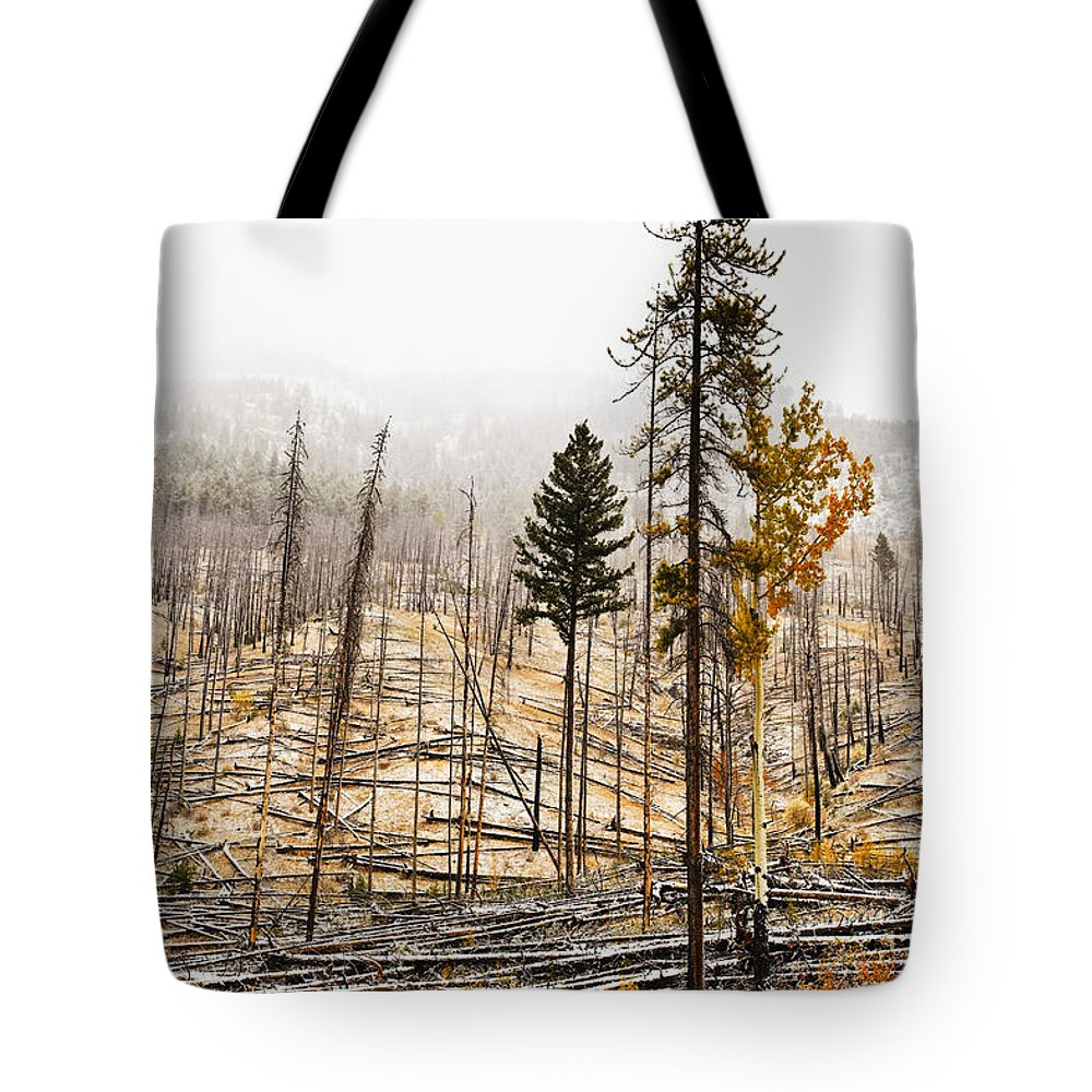 Light Tote Bag featuring the photograph Sawback Burn, On Bow Valley Parkway by Ken Gillespie