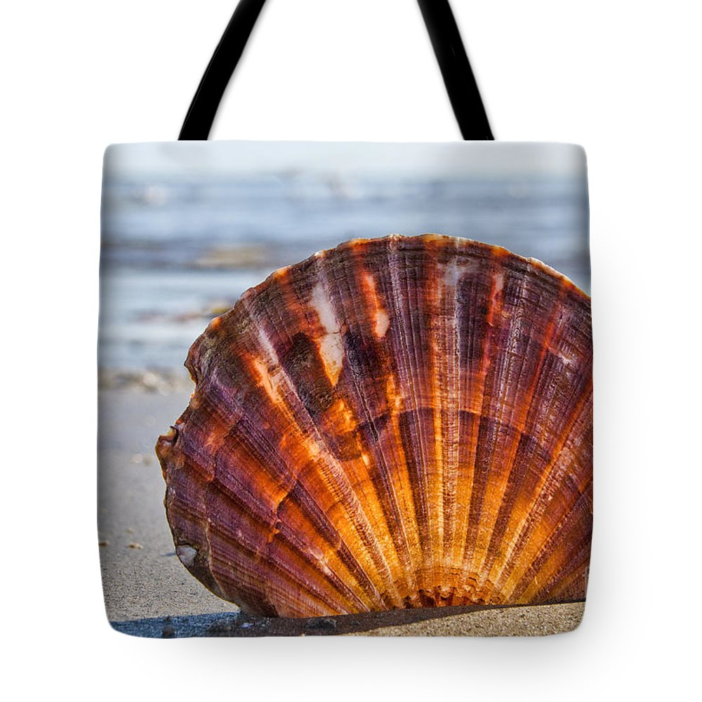Scallop Tote Bag featuring the photograph Scallop Shell 2 by Susie Peek