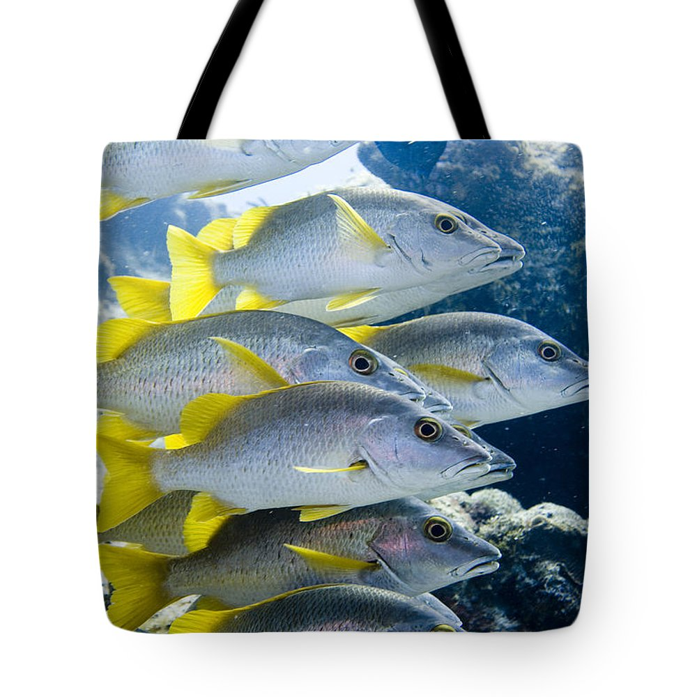 School Tote Bag featuring the photograph Schoolmaster Snappers by Jim Murphy