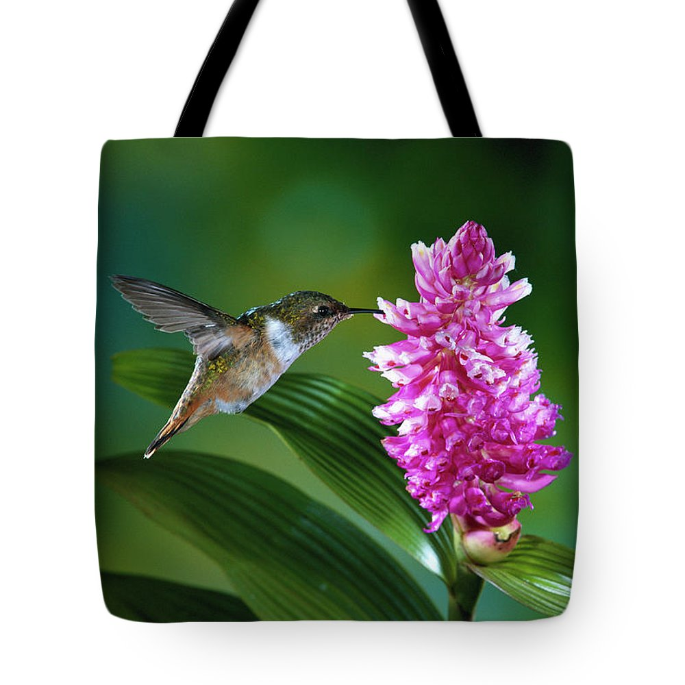 Close Up Tote Bag featuring the photograph Scintillant Hummingbird Selasphorus by Michael and Patricia Fogden