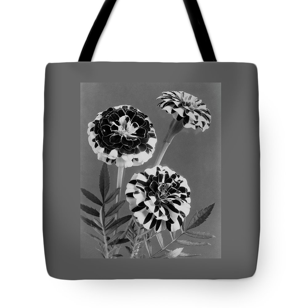 Flowers Tote Bag featuring the photograph Scotch-stripe Marigolds by J. Horace McFarland