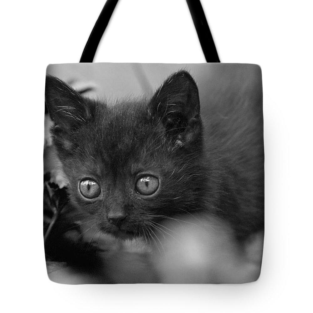 Cat Tote Bag featuring the photograph Scout by Daniel Csoka