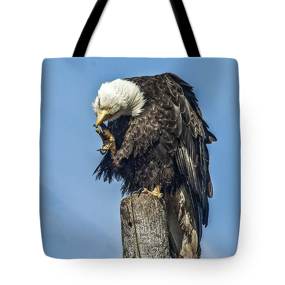 American Tote Bag featuring the photograph Scratch When You Itch by David Kehrli