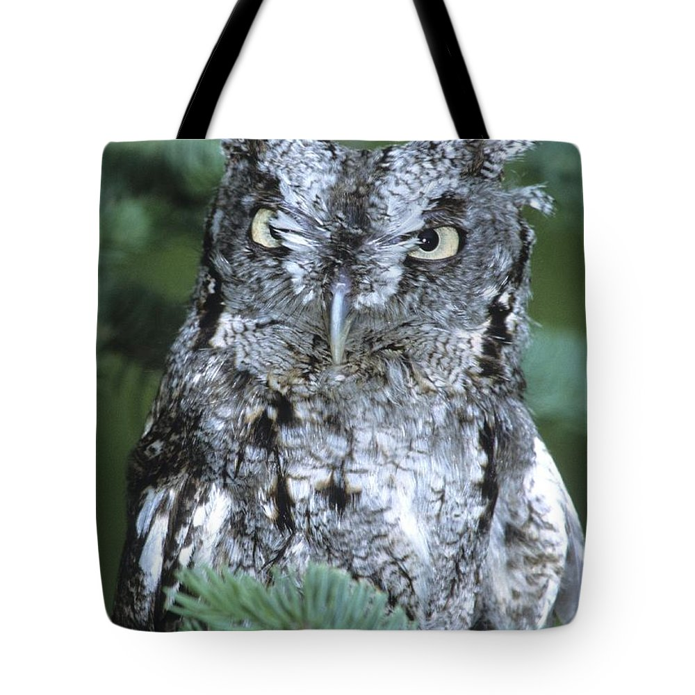 Owl Tote Bag featuring the photograph Screech Owl Straight On by Larry Allan