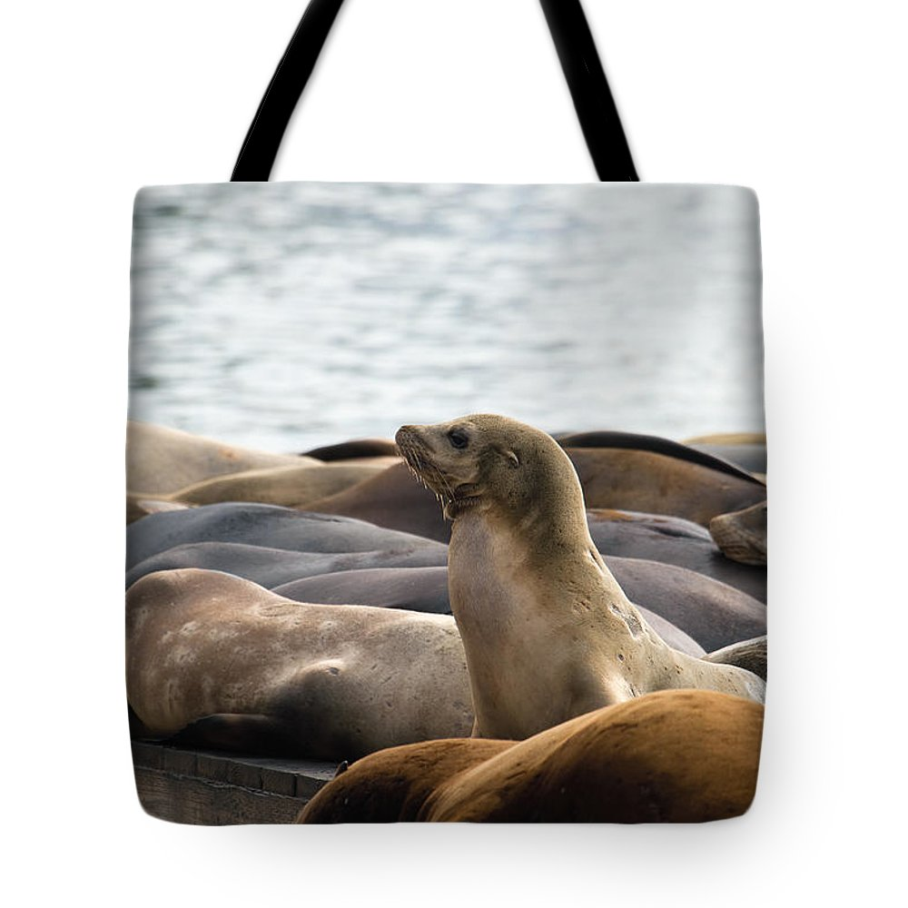 Sea Tote Bag featuring the photograph Sea Lions Sunning On Barge At Pier 39 San Francisco by Jit Lim