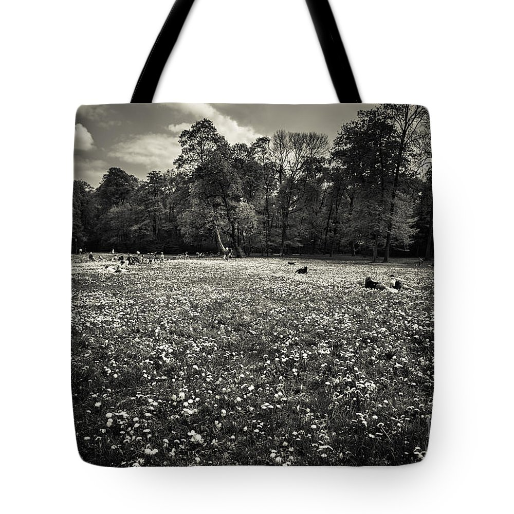 Black And White Tote Bag featuring the photograph Sea Of Dandelion - Bw by Hannes Cmarits