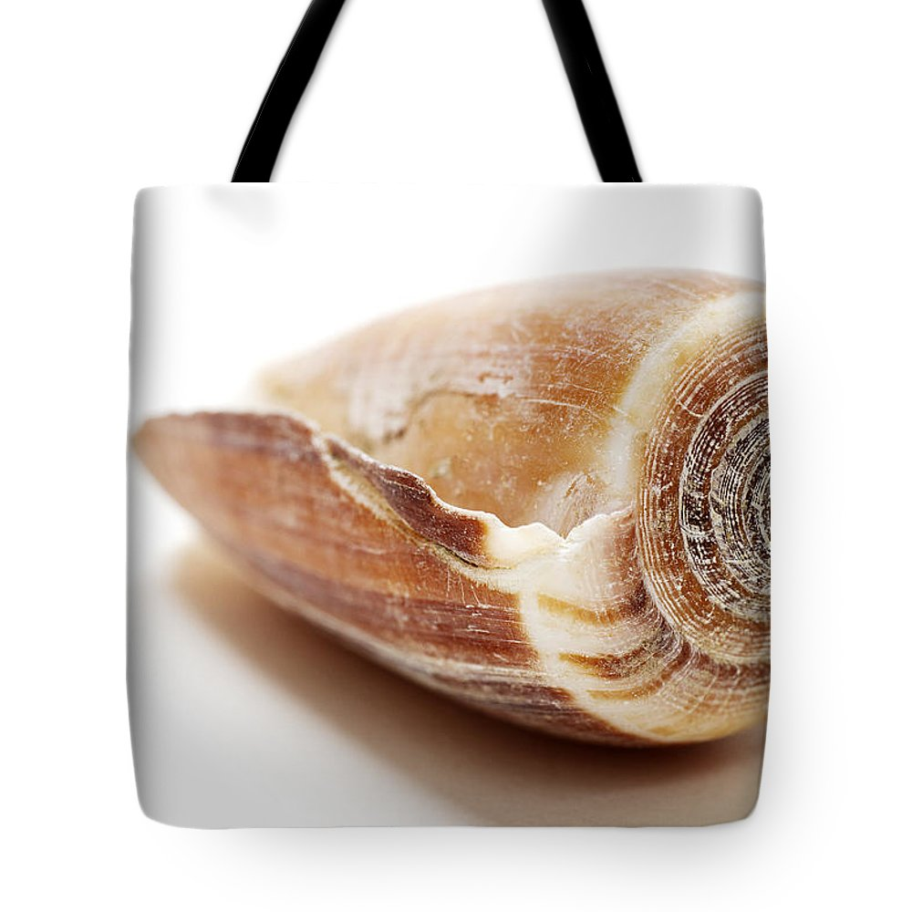 Shell Tote Bag featuring the photograph Sea Shell by Donald Erickson