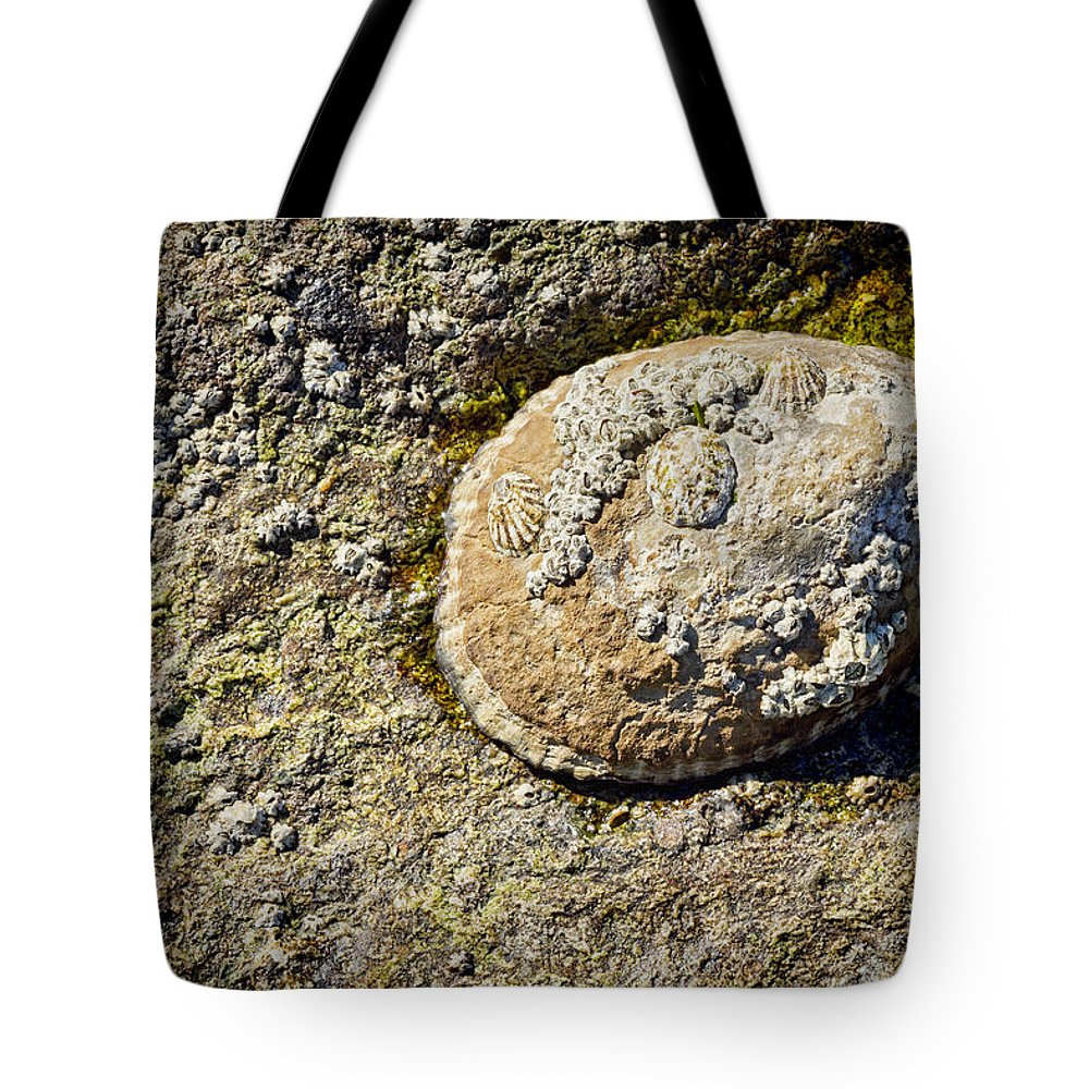 Gastropods Tote Bag featuring the photograph Sea Shell Rock by Kelley King