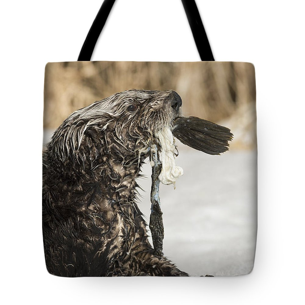 Otter Tote Bag featuring the photograph Seafood by Ted Raynor